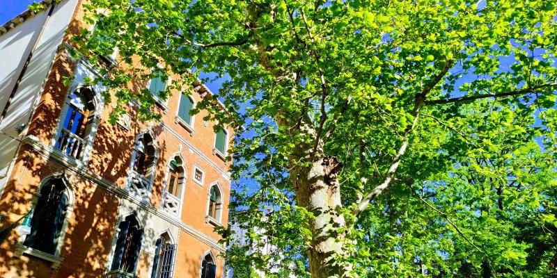 venezia palazzo gotico rosa con albero verde davanti